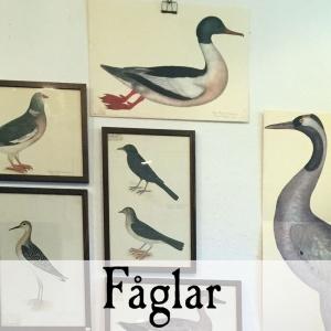 Fåglar