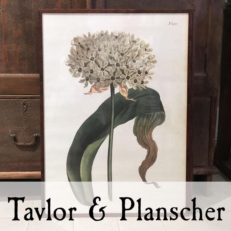 Tavlor/planscher